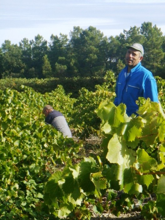 Domaine Julien de l' Embisque, Thierry Gaide, the owner in his organic vineyard