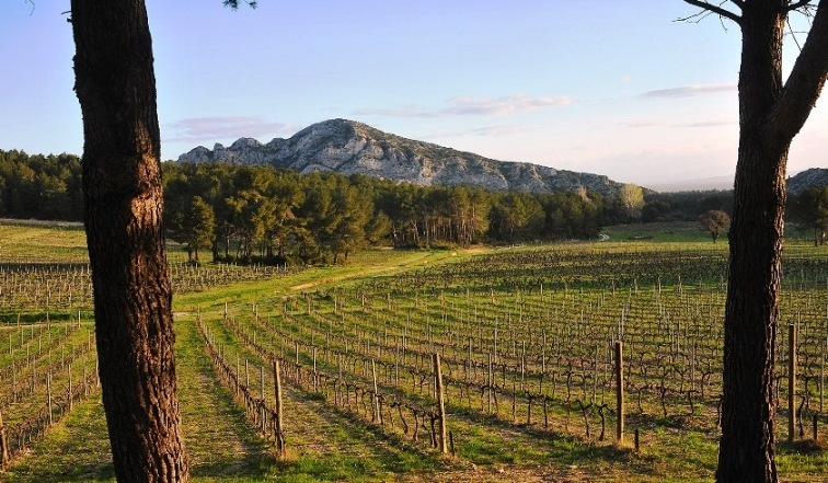 Domaine_de_la_Vallongue_in_Saint_Remy_de_Provence
